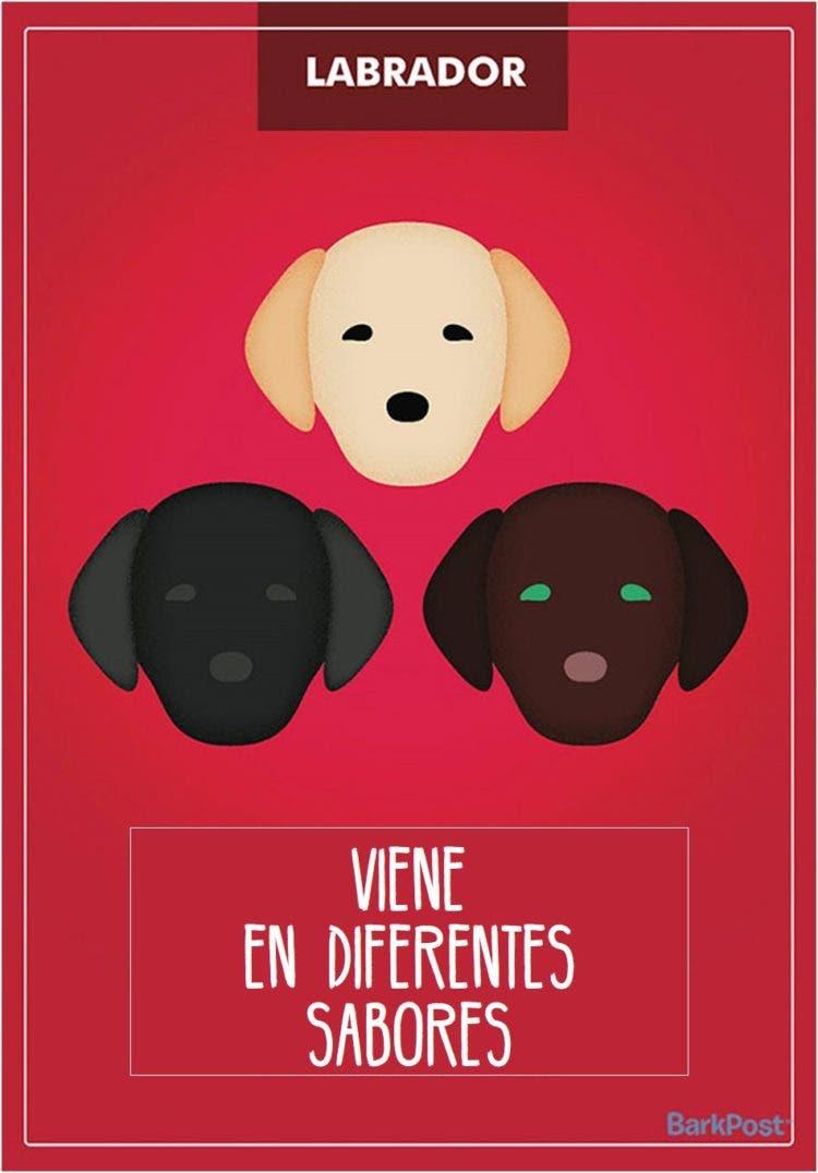 estereotipos-de-perros-9
