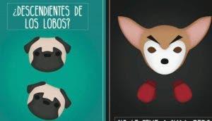 estereotipos-de-perros-portada