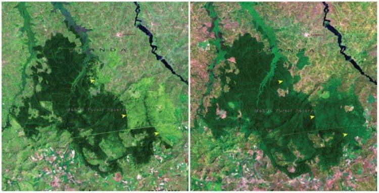 fotos-NASA-la-tierra-antes-ahora-cambio-climatico-real-10
