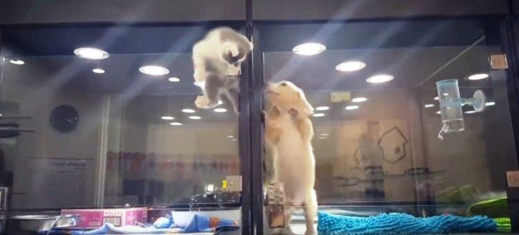gato-se-escapa-de-tienda-de-mascotas-a-jaula-del-perro1