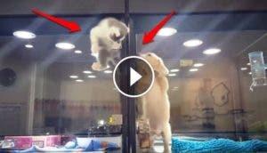 gato-se-escapa-de-tienda-de-mascotas-a-jaula-del-perro1 - Copy