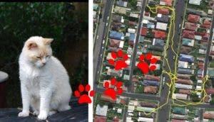 gps gatos id