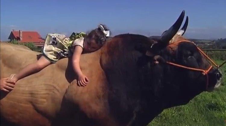 toro-terapia-animal1