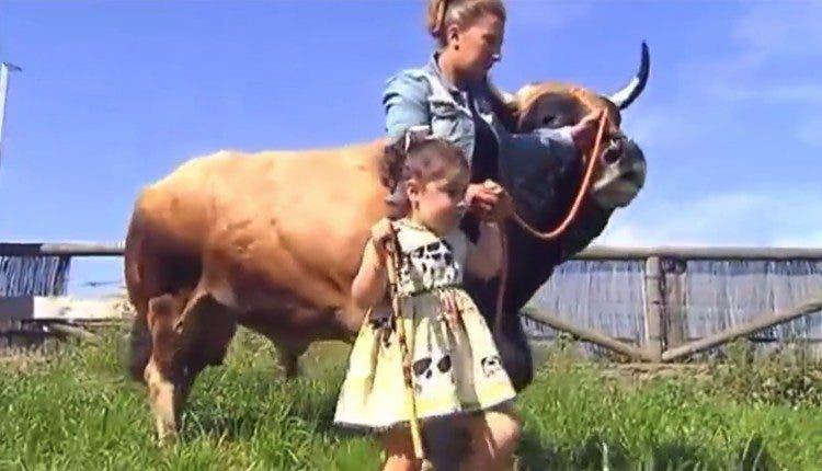 toro-terapia-animal6
