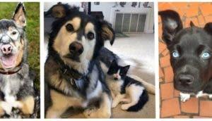 adorables animales adoptados id