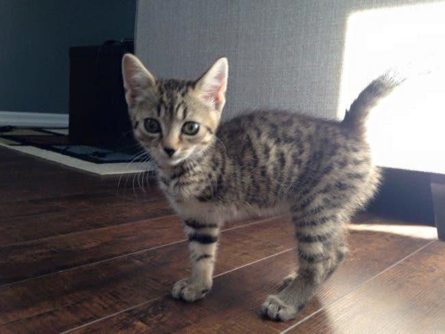 adorables mascotas adoptadas 1-iloveimg-converted