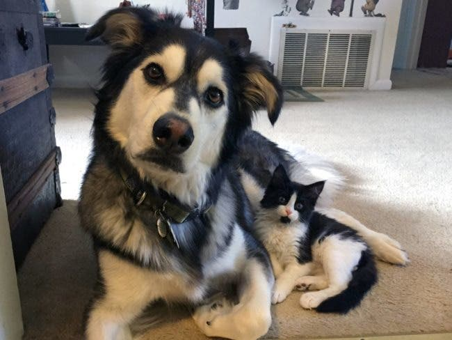 adorables-mascotas-adoptadas-10