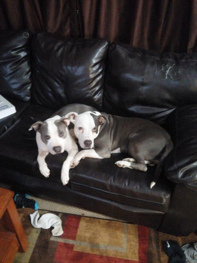 adorables-mascotas-adoptadas-14