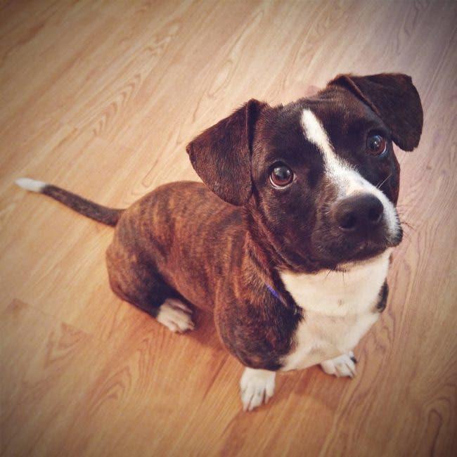 adorables-mascotas-adoptadas-15