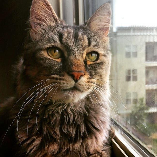 adorables-mascotas-adoptadas-16