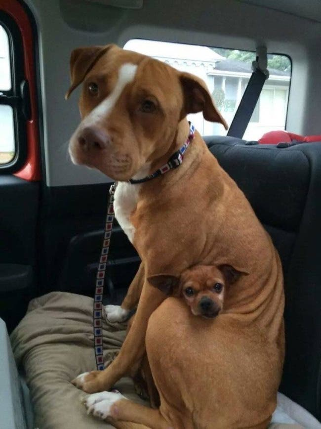 adorables-mascotas-adoptadas-17