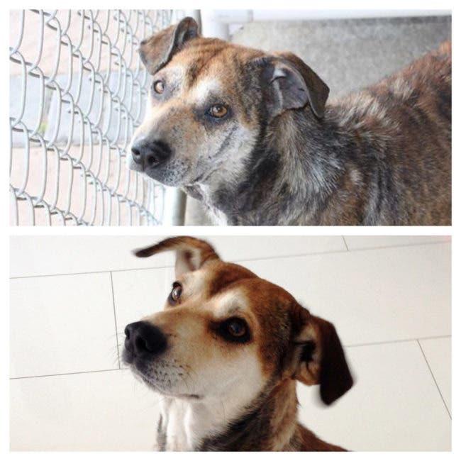 adorables-mascotas-adoptadas-22