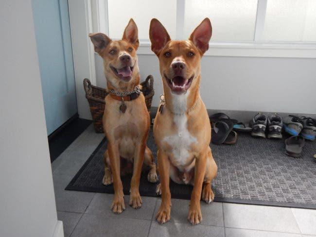 adorables-mascotas-adoptadas-4