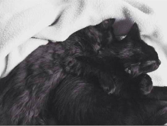 adorables-mascotas-adoptadas-5