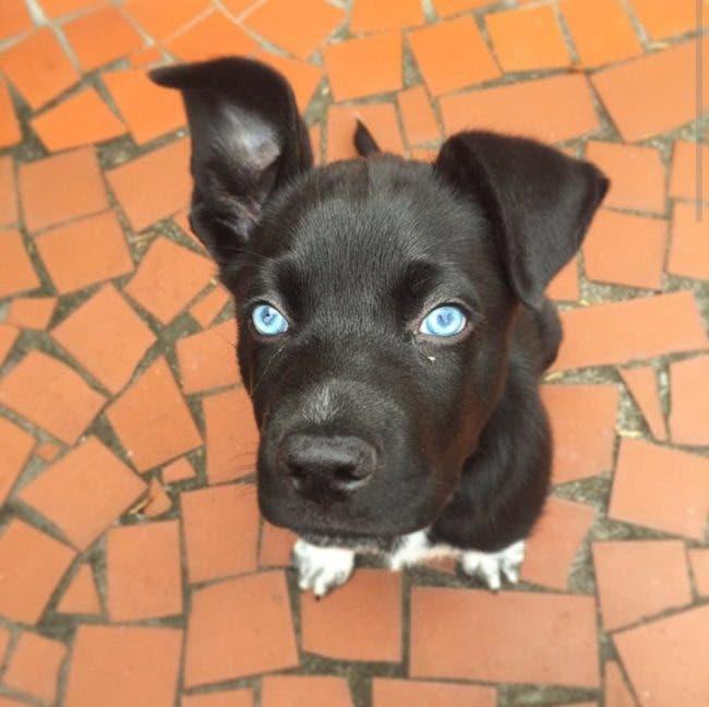adorables-mascotas-adoptadas-6