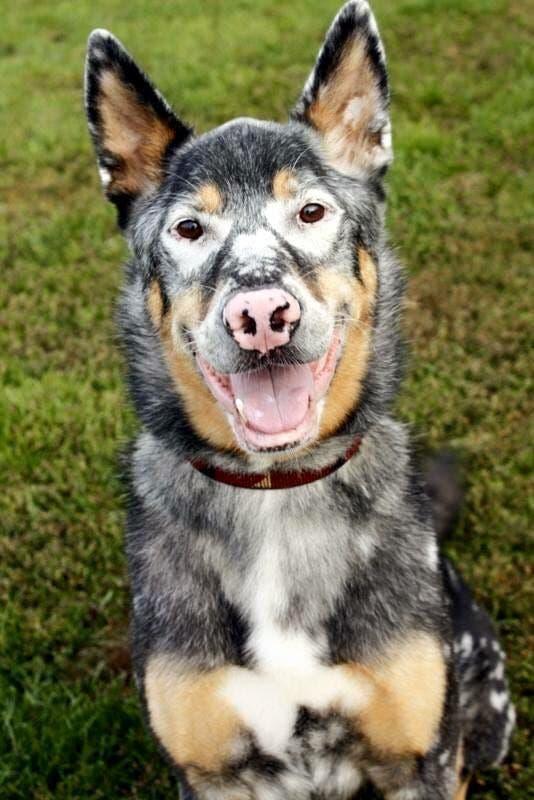 adorables-mascotas-adoptadas-7