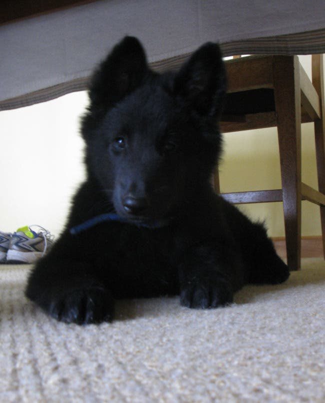 adorables-mascotas-adoptadas-8