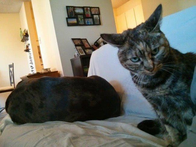 adorables-mascotas-adoptadas-9