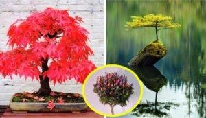 arboles-que-simbolizan-la-eternidad