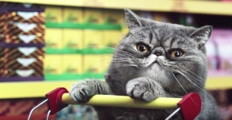 comercial-de-gatos1