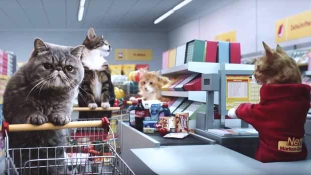 comercial-de-gatos2