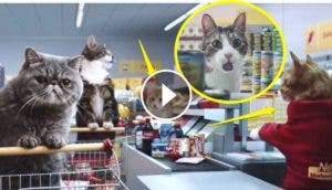 comercial-de-gatos6