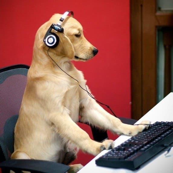 cosas-curiosas-que-hacen-los-perros1
