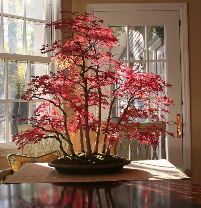 diferentes-unicos-bonsais-arte-japones-cultivar-arboles-miniatura-1