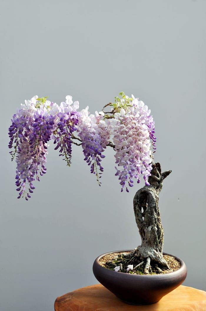 diferentes-unicos-bonsais-arte-japones-cultivar-arboles-miniatura-10