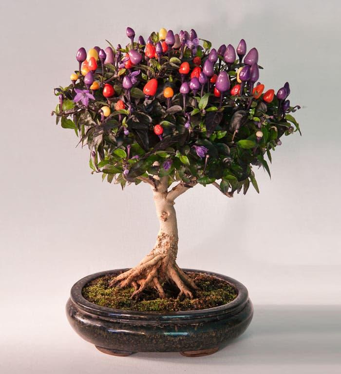 diferentes-unicos-bonsais-arte-japones-cultivar-arboles-miniatura-13