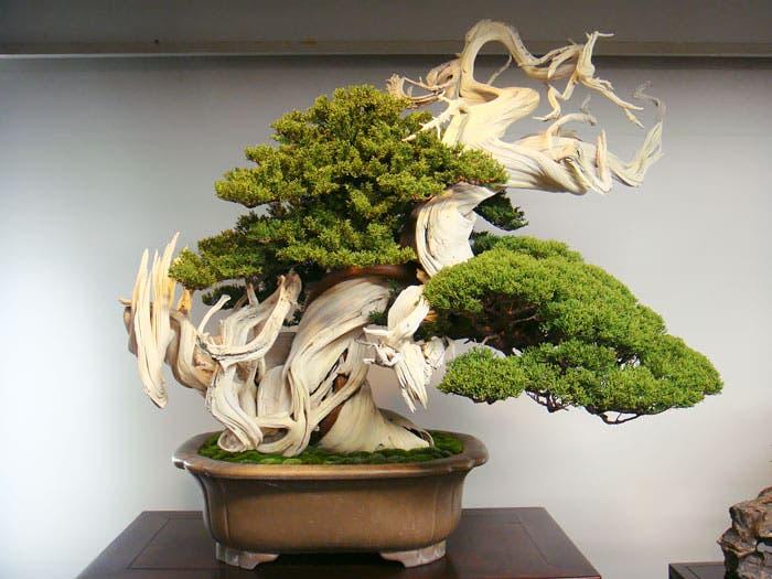diferentes-unicos-bonsais-arte-japones-cultivar-arboles-miniatura-2