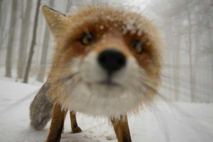 fotografos-sorprendidos-por-los-animales-que-intentan-capturar-13-1