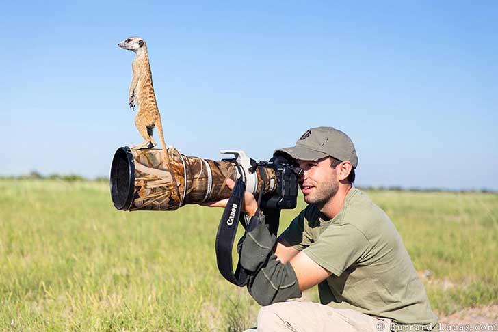 fotografos-sorprendidos-por-los-animales-que-intentan-capturar-14