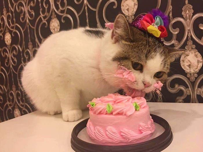 gatito-cumpleaños-1