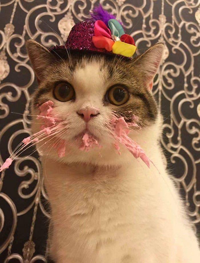 gatito-cumpleaños-4