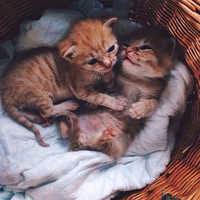 gatitos-inseparables-1