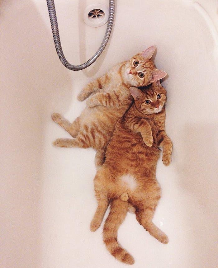 gatitos-inseparables-13