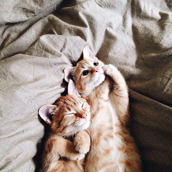 gatitos-inseparables-14