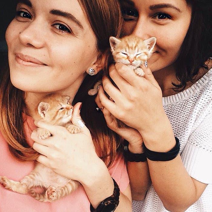 gatitos-inseparables-15