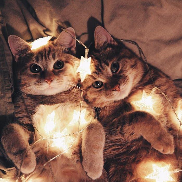 gatitos-inseparables-16