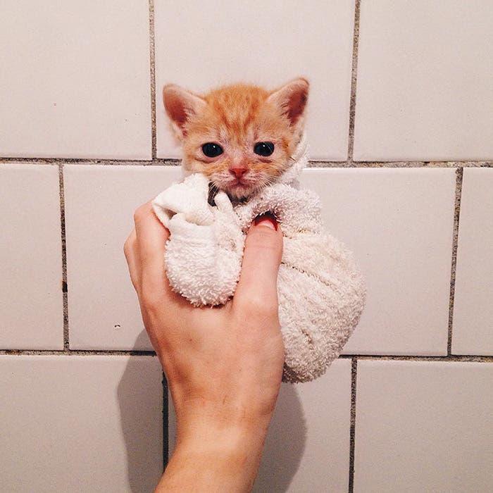 gatitos-inseparables-2