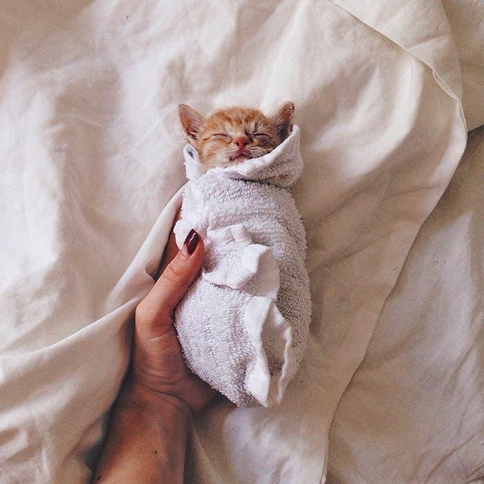 gatitos-inseparables-5