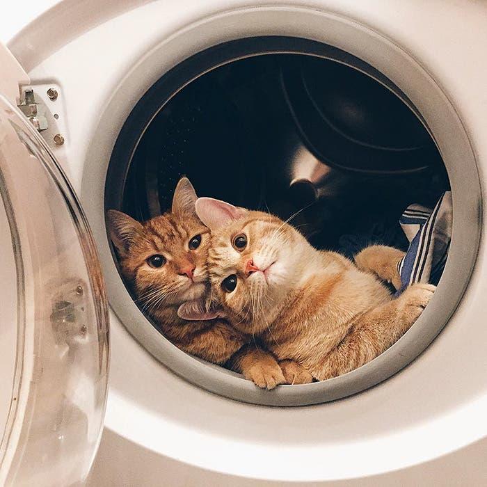 gatitos-inseparables-6