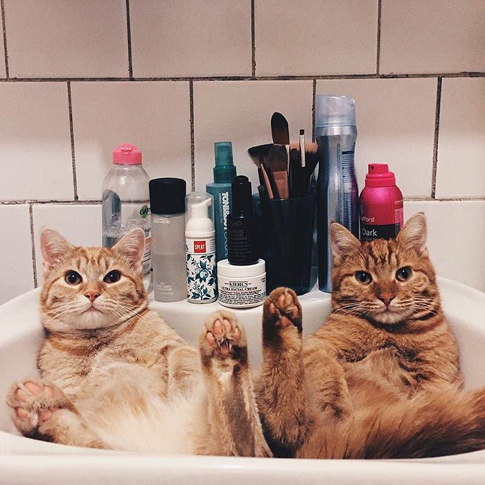 gatitos-inseparables-9