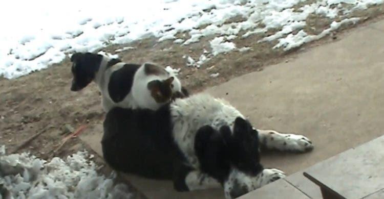 gato-perro-se-suben-en-el-perro-grande1