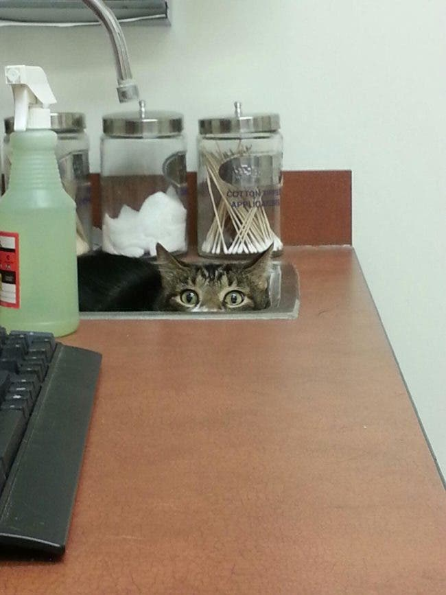 gatos-escondidos-en-lugares-comiquisimos-por-miedo-al-veterinario-1
