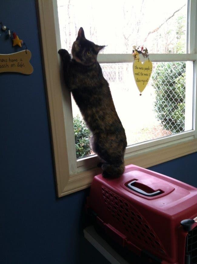 gatos-escondidos-en-lugares-comiquisimos-por-miedo-al-veterinario-16