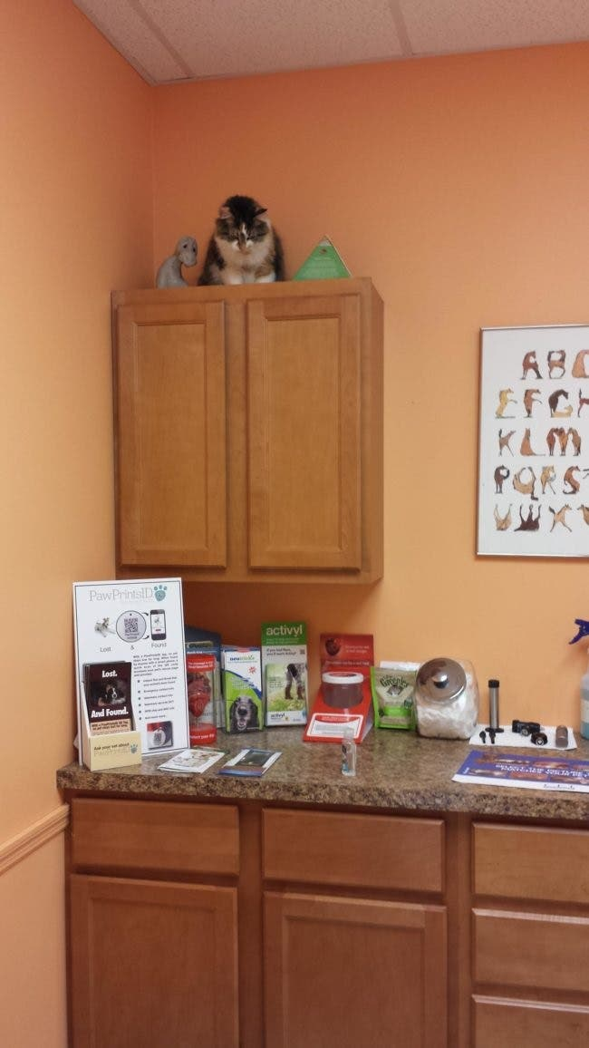 gatos-escondidos-en-lugares-comiquisimos-por-miedo-al-veterinario-20