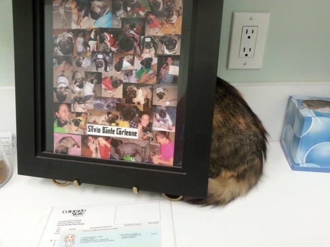 gatos-escondidos-en-lugares-comiquisimos-por-miedo-al-veterinario-6