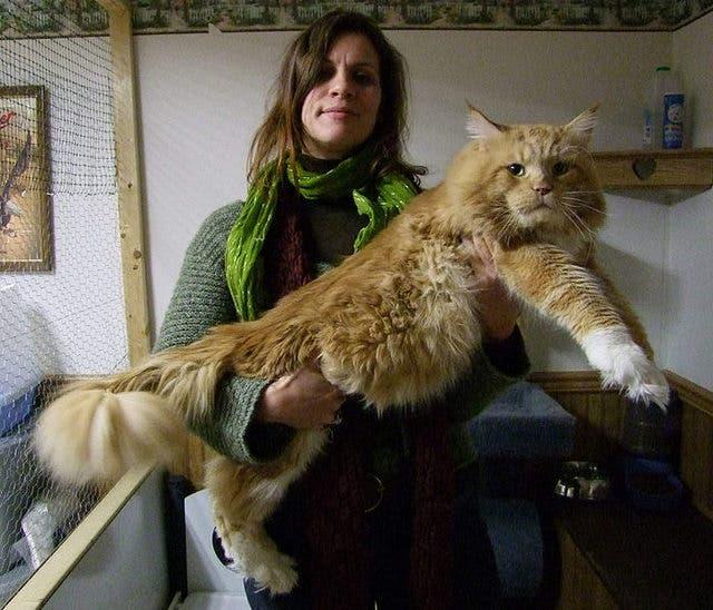 gatos masivos 13